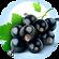 Blackcurrant Seed Oil Ribes Nigrum Seed.