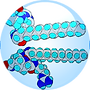 Biopeptide-CL-18.01.2016-150x150.png