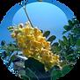 Tara-Tree-Extract-18.01.2016-150x150.png