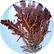 Red-Algae-Extract-18.01.2016-150x150.png