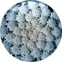 Masterwort-Leaf-Extract-18.01.2016-150x1