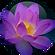 Sacred Lotus Nelumbo Nucifera Leaf Extra