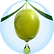 OLIVE FRUIT OIL.png
