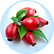 Rosa Canina Fruit Oil Rosehip.png