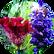 Hydrolyzed Celosia Cristata Flower Seed