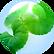 Centella-Asiatica-18.01.2016-150x150.png