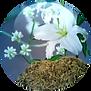 Bioskinup-Contour-18.01.2016-150x150.png