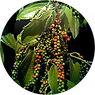 HYDROLYSED PEPPER FRUIT EXTRACT