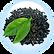 Kombuchka Black Tea Ferment Saccharomyce