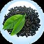 KOMBUCHKA BLACK TEA FERMENT