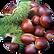 Chestnut Castanea Sativa Seed Extract.pn