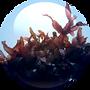 Hypnea-Musciformis-Algae-Extract-18.01.2
