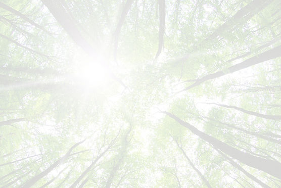 Forest%2520Trees_edited_edited.jpg
