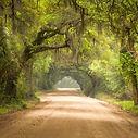 bigstock-Charleston-Sc-Dirt-Road-Forest-