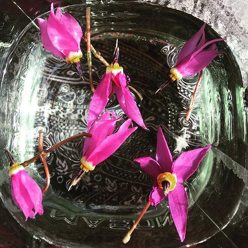 Learn to Make Flower Essences