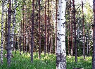 Using Ancient Treebanks: Reports and Dreams - 20-21/09/2019, Helsinki (Finland)