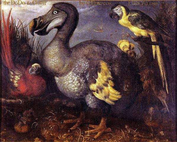 """""""Edvardov Dodo"""", slika Rulanta Saverija (Prirodnjački muzej u Londonu)"""