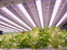 植物工場.jpg