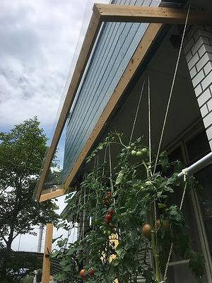 トマトテスト栽培