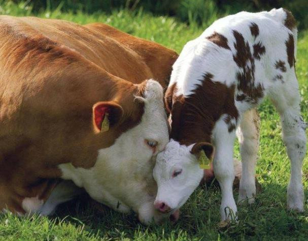 AHIMSA   Cultivating love and compassion for all living beings