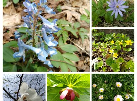~春一番の花~
