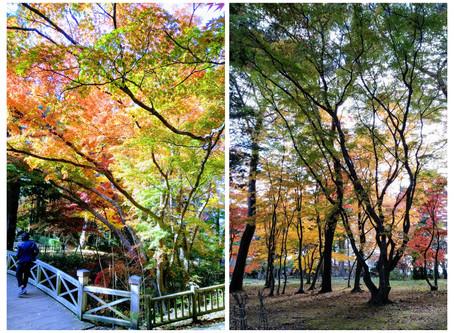 香雪園で紅葉狩り!