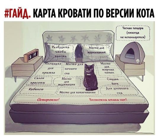 Гайд_Карта кровати по мнению кота