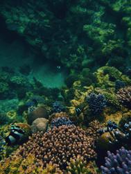 Aquatic palettes