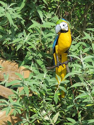 papegaai op stok