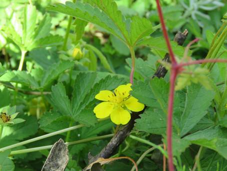 Gele bloemetjes in de tuin