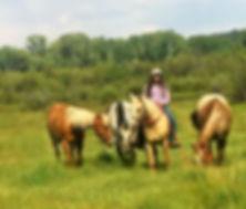 ash horses (2).jpg