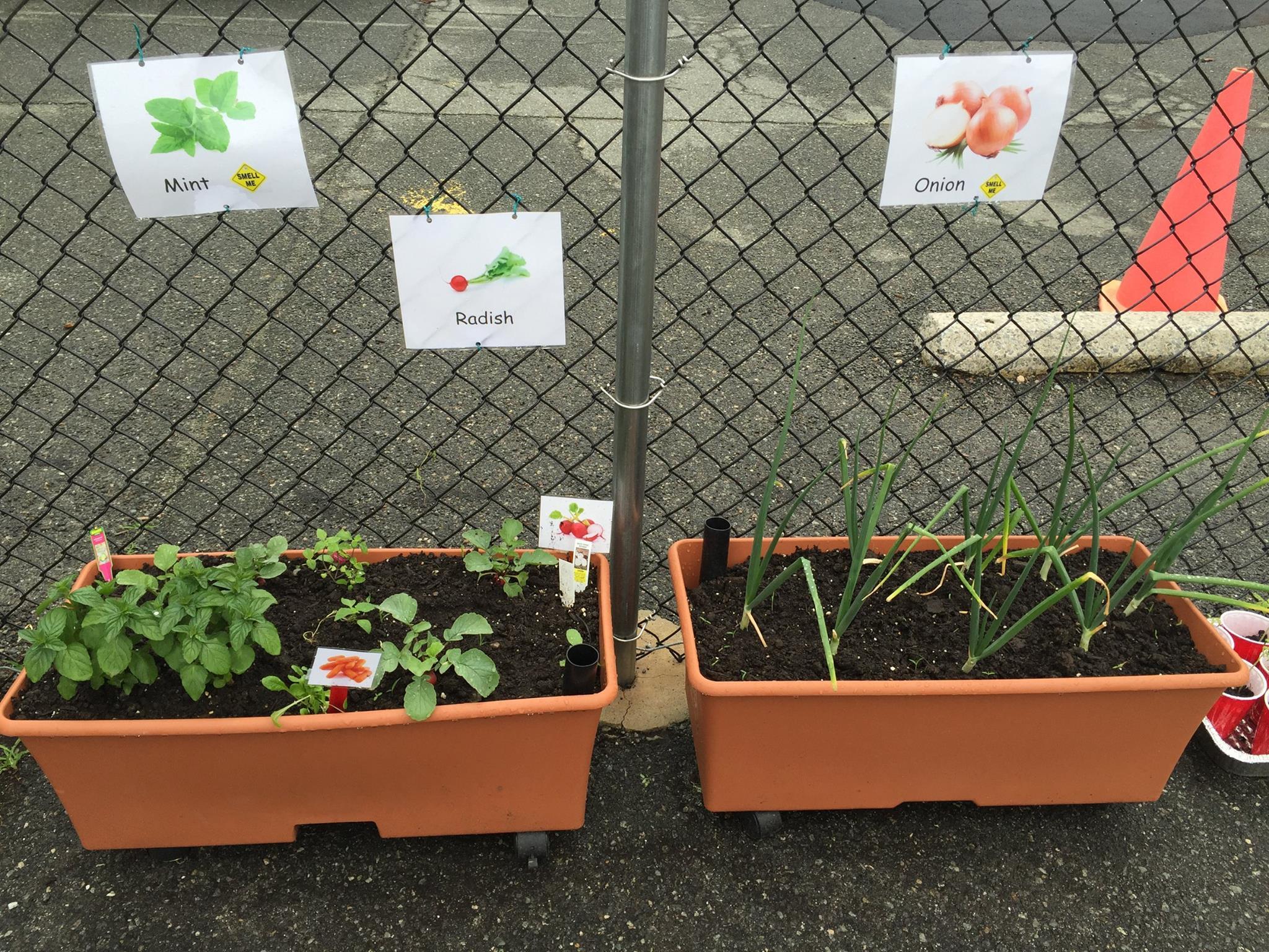 Gardening (5)