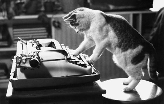 4 író, sok macska