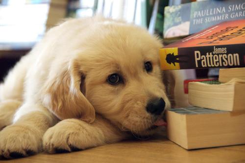 A kutyák szeretik a könyveket