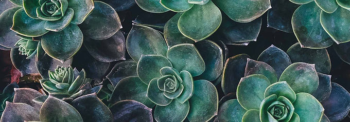 Succulents_cropped_700.jpg