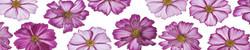 Кухонный фартук цветы 057