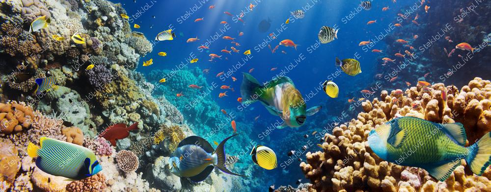 Кухонный фартук подводный мир 001