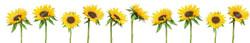 Кухонный фартук цветы 039.jpg