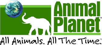Animal Planet Logo.png