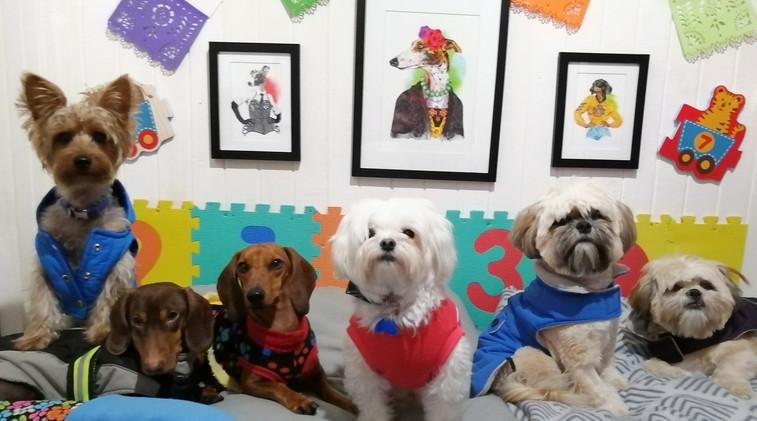 Guarderia y Hotel Canino - Bendita Mascota