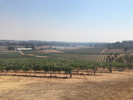 Today's ultimate Vineyards Tour
