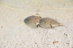 Cacerola de mar