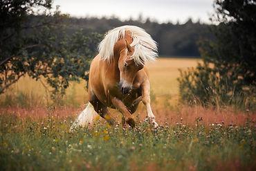 dein Pferdeshooting