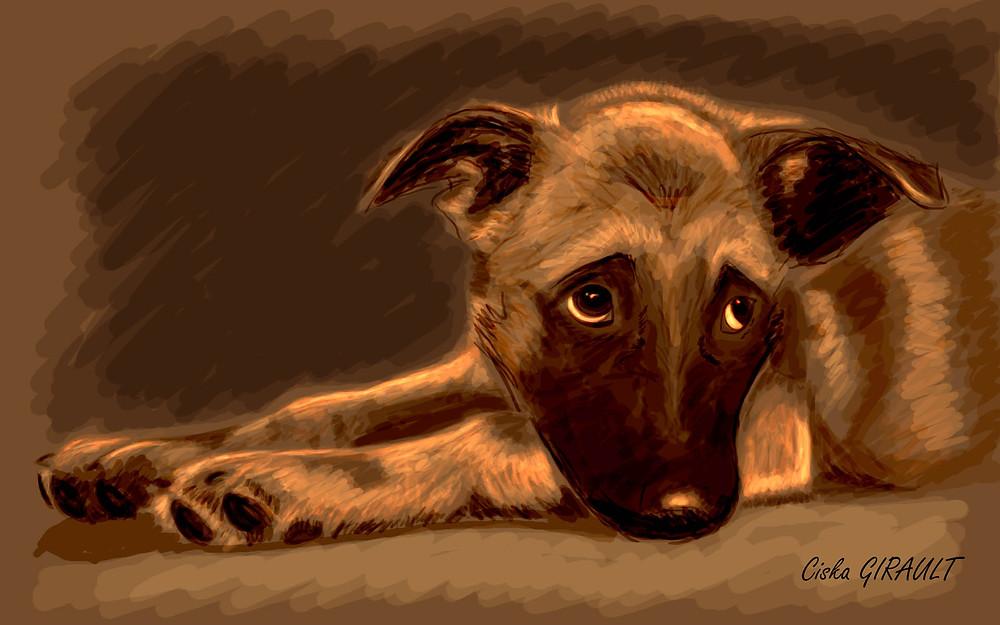 détresse acquise impuissance apprise learned helplessness, votre chien est-il atteint?