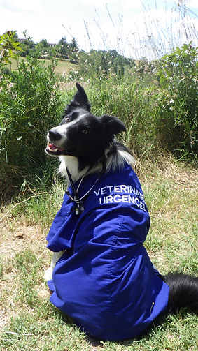 secourisme urgence vétérinaire