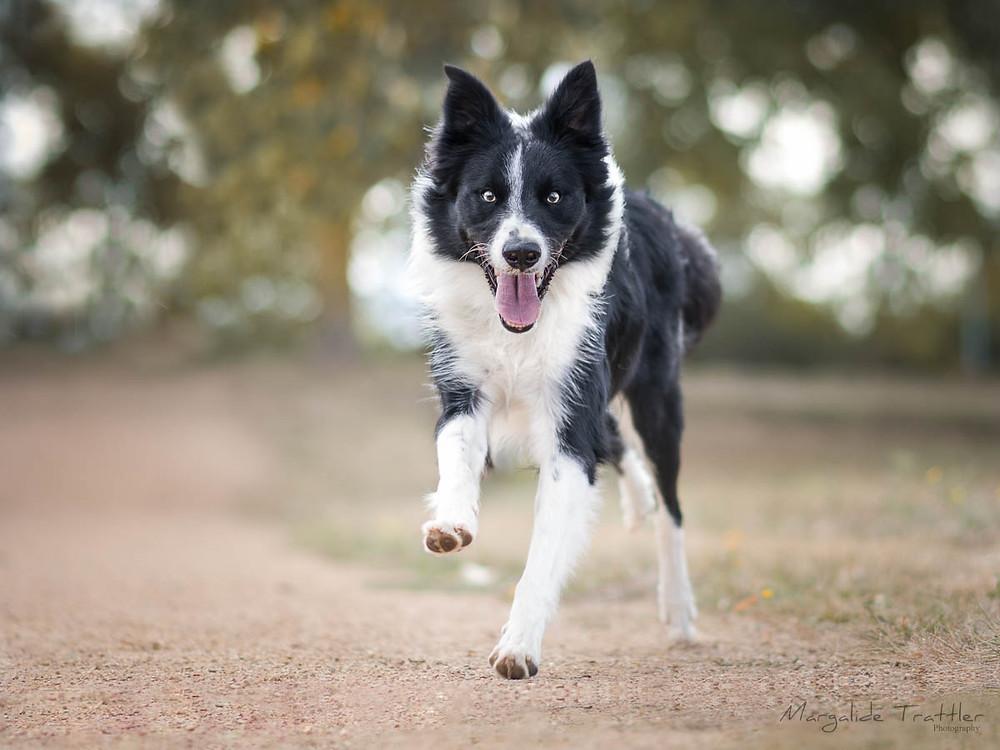 renforcement positif medical training chien heureux
