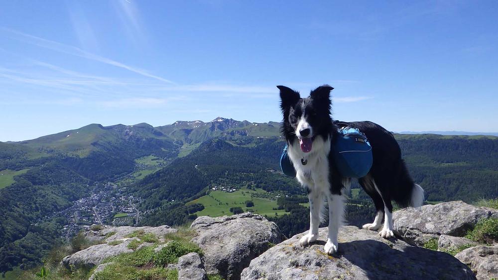 GR 30 bivouac chien