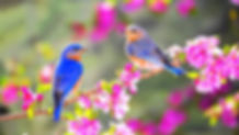 Spring-Cleansing-1024x576.jpg
