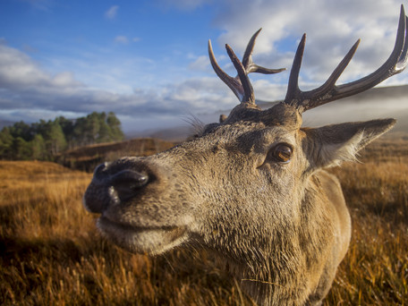 Scottish based wildlife photographer Philip Price with an insight into his local world.