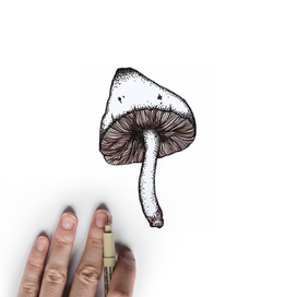 For a project I made a collection of nature inspired tattoo designs, incorporating repetitve lines to create illusive texture.  I had so much fun drawing mushrooms becasue not only are they intricate works of nature, they contain many healing properties as well.